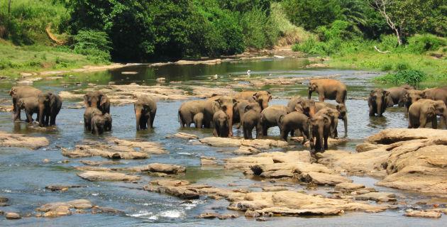 Sri Lanka: il bagno degli ospiti del Pinnawala Elephant Orphanage