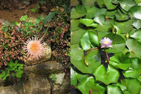 Meraviglie dello Sri Lanka: i fiori