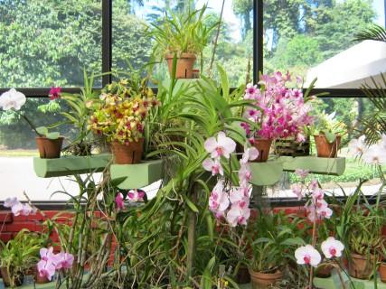 Sri Lanka: le sovrane del giardino botanico, le orchidee