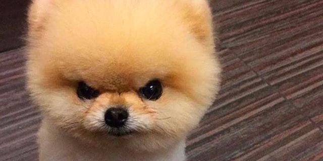 Animali domestici spaventosi: cane