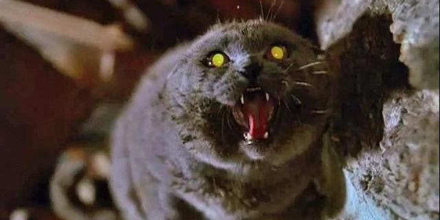 Animali domestici spaventosi: gatto infuriato