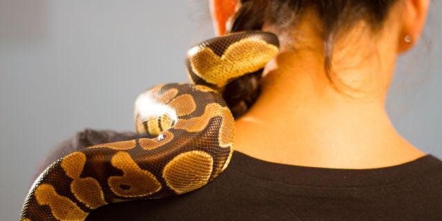 Animali domestici spaventosi: serpente