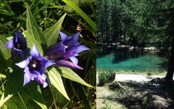 Estate 2018 in montagna: fiori e lago