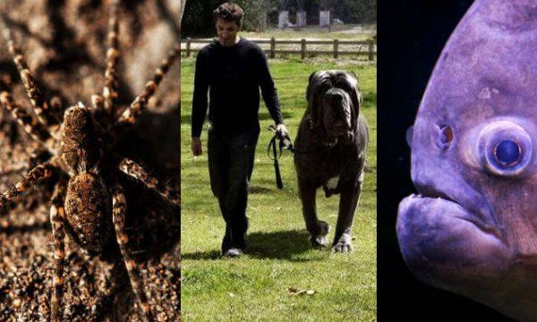 Insospettabili e mostruosi animali da compagnia